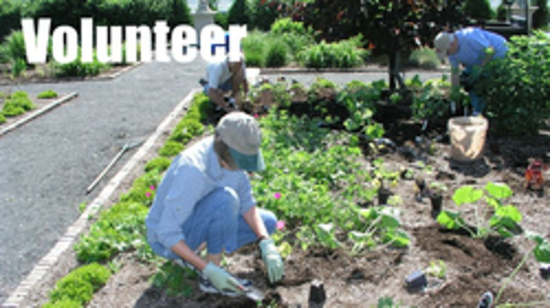 Volunteer Days